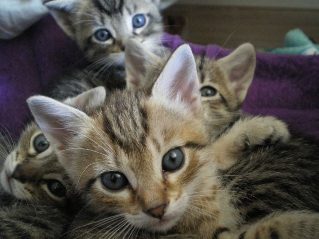 17 febbraio Festa del gatto
