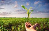 +20% per il biologico nel 2015