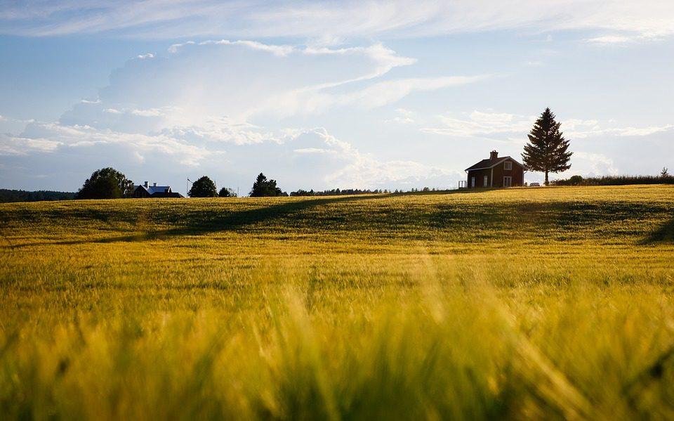 Agricoltura al top per crescita di partite Iva