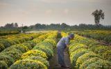 Agricoltura: come la legge sul sovraindebitamento può aiutare le imprese in difficoltà