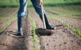 Agricoltura sostenibile: il grande assente di Parigi