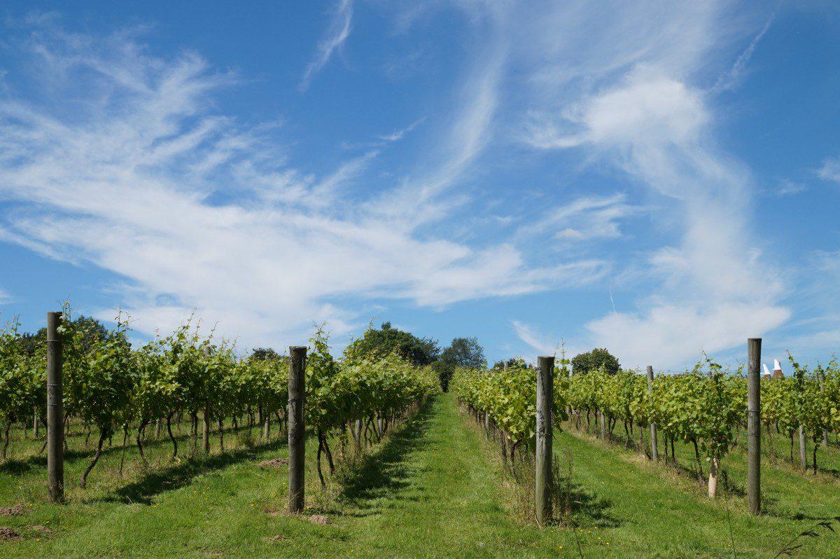 Agricoltura sostenibile: l'inefficienza dell'Italia