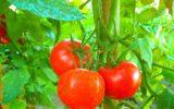 Agroalimentare la Campania ad Anuga