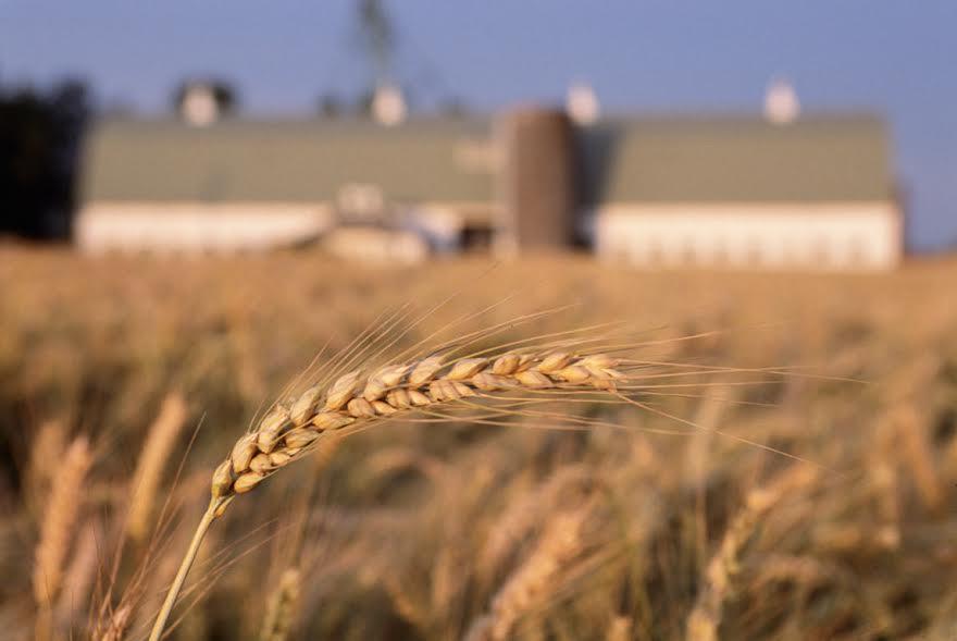 Agrofarmaci e danni alla salute: la norma c'è