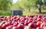 Al Villaggio contadino di Bologna gli aggiornamenti sui danni del clima all'agricoltura