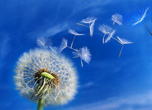 Allergie e immunologia