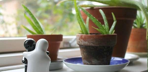 Aloe vera per conservare la frutta