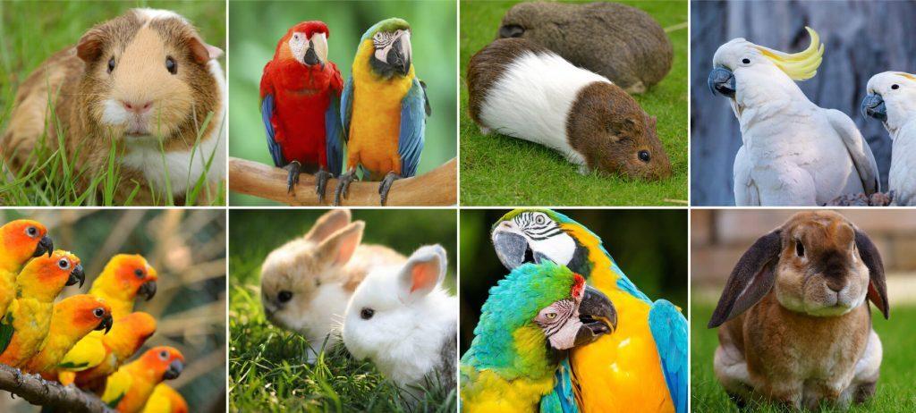 Animali domestici presenti in una casa su tre