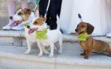 Animali domestici trattati come umani: quali sono i probabili rischi?