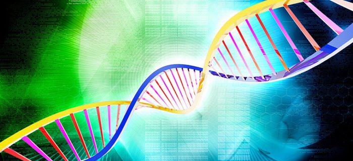 AREX: scoperto un sistema di controllo del trasporto intracellulare di proteine e lipidi