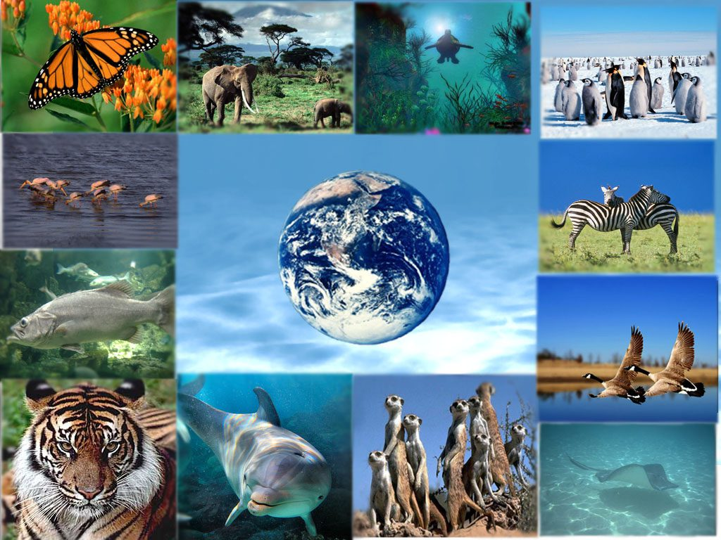 Arrestare la perdita di biodiversità entro il 2020