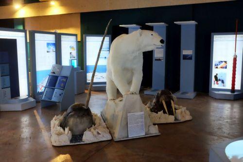 Artico - Viaggio interattivo al Polo Nord 2018