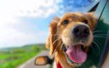 Assicurazioni da viaggio per gli animali