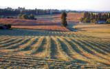 Aumenta la deflazione nei campi agricoli