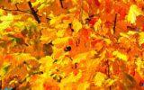 Autunno bollente: non cadono le foglie