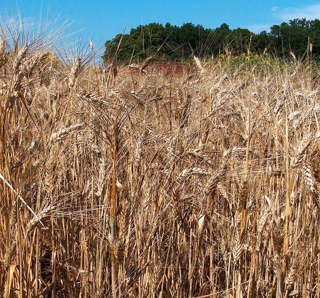 Bari: sviluppo agro-ambientale del territorio