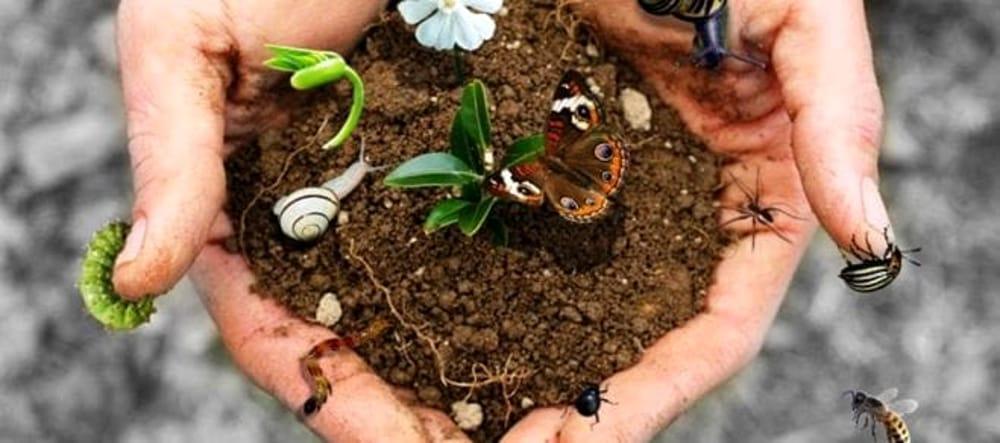 Biodiversità: l'allarme di Coldiretti