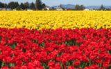 Biodiversità: l'UE adotta delle conclusioni