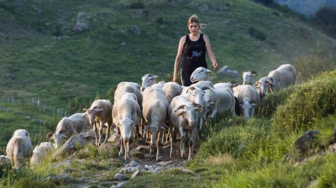Boom dei giovani pastori