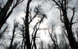 Bosque Muerto