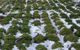 Cambiamenti climatici: crolla drasticamente l'occupazione nei campi