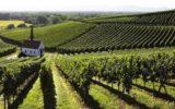 Cambiamenti climatici e viticoltura: lo stato in regione Campania