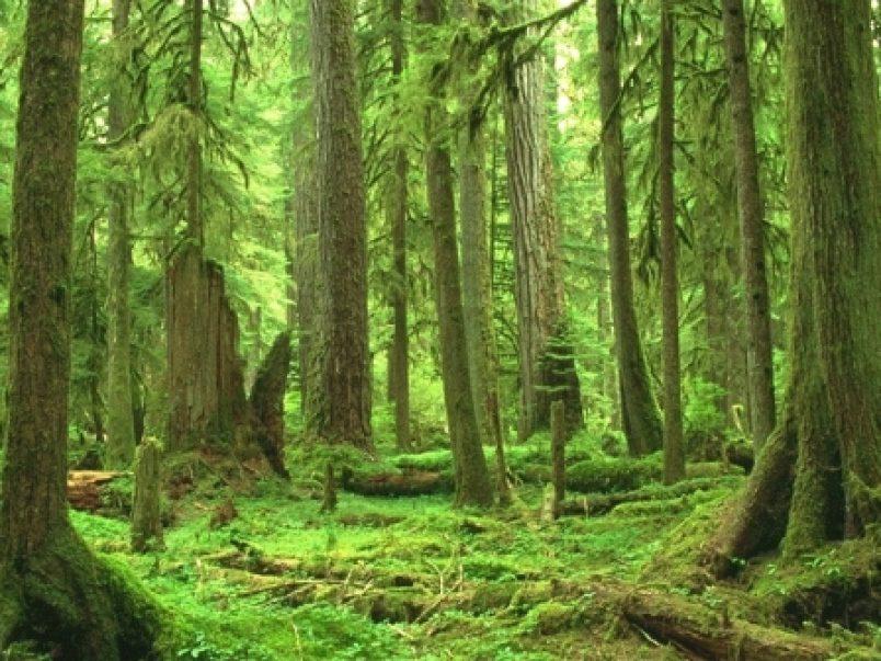 Campania: il piano di forestazione e bonifica montana