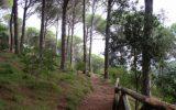 Campania: interventi di forestazione e bonifica montana