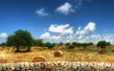 Campania: l'estate del PSR