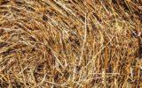 Campania: nuovi bandi per l'agricoltura