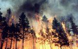 Campania: nuovi fondi per la prevenzione degli incendi boschivi