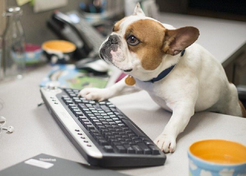 Cani in ufficio: pro e contro della nuova proposta di Genova