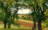 Castanicoltura in Campania: approvata la normativa tecnica