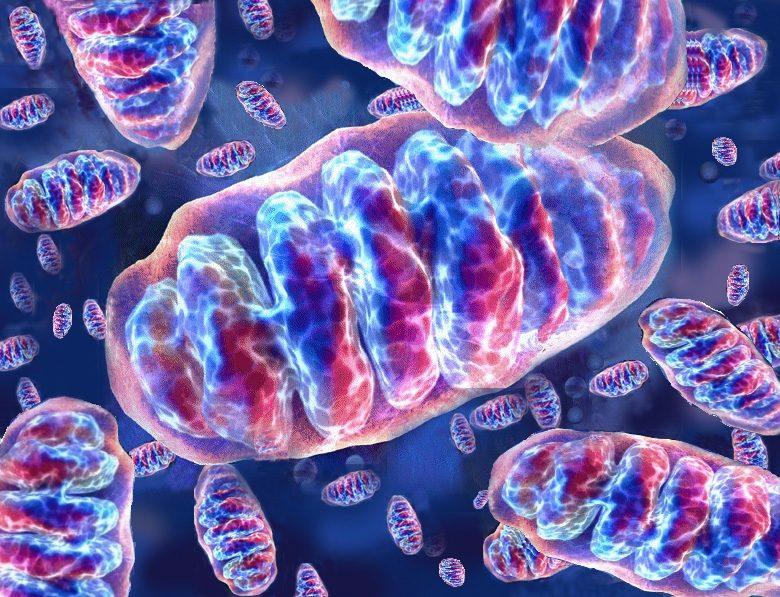 Charlie Gard: la forza del web per parlare di malattie mitocondriali