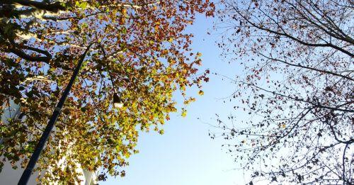Ciclo delle piante e cambiamenti climatici