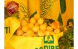 Clima: meloni e albicocche già in vendita