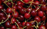 Coldiretti: Arrivano già le ciliegie e i meloni