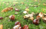 """Coldiretti: autunno """"nero"""" per le castagne"""