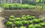 Coldiretti: il fai da te negli orti degli italiani