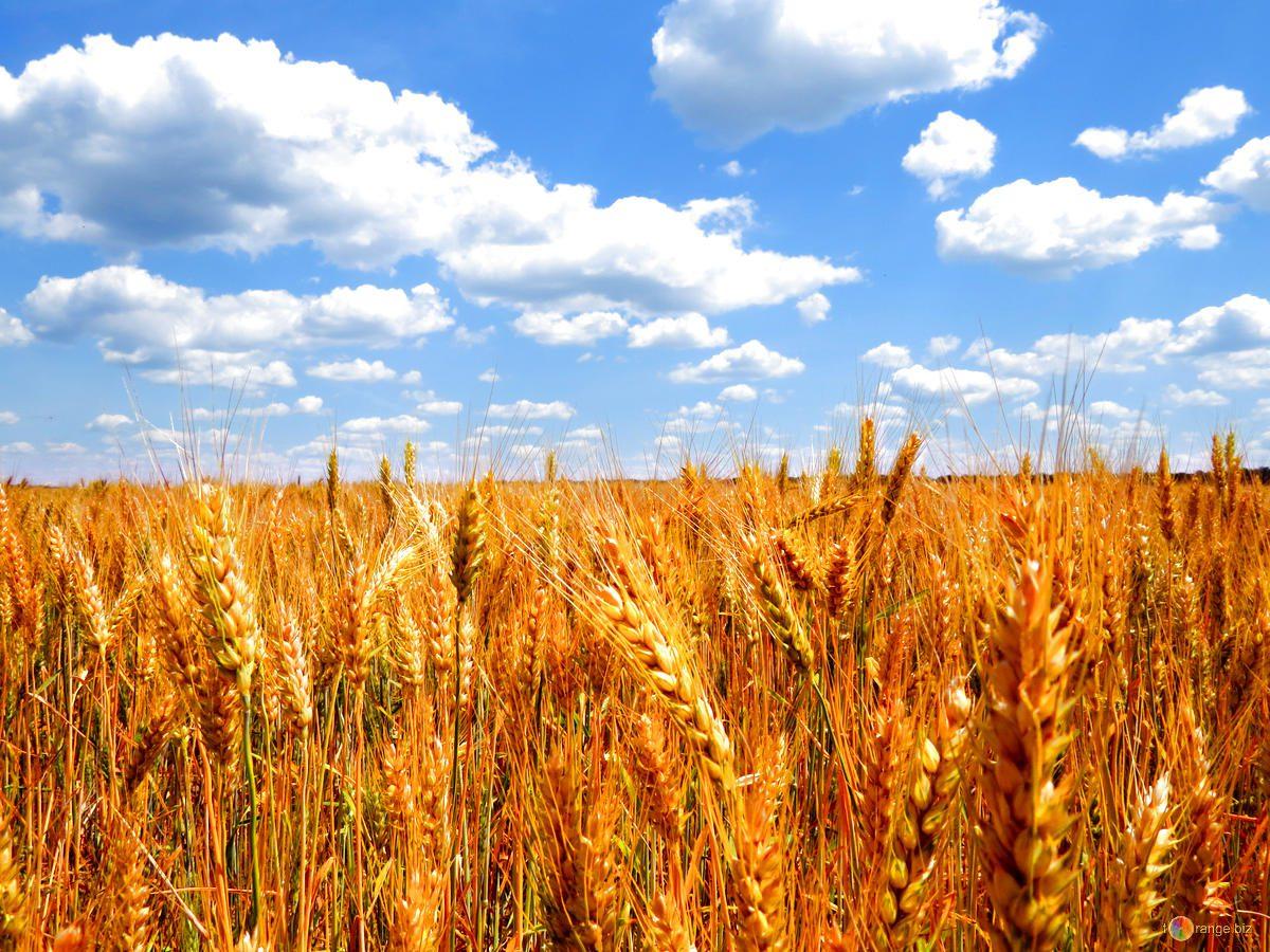 Coldiretti: l'agricoltura che fa crescere l'occupazione