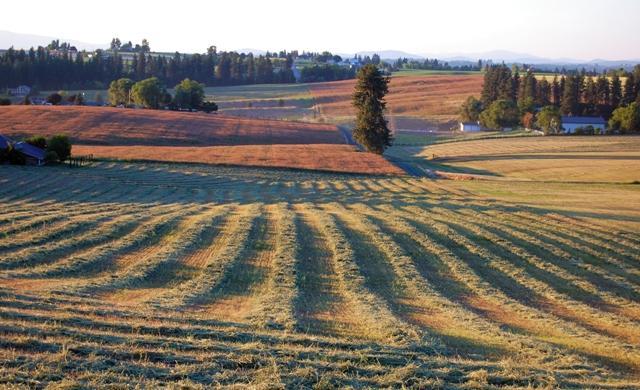 Coldiretti: L'agricoltura del sud cresce