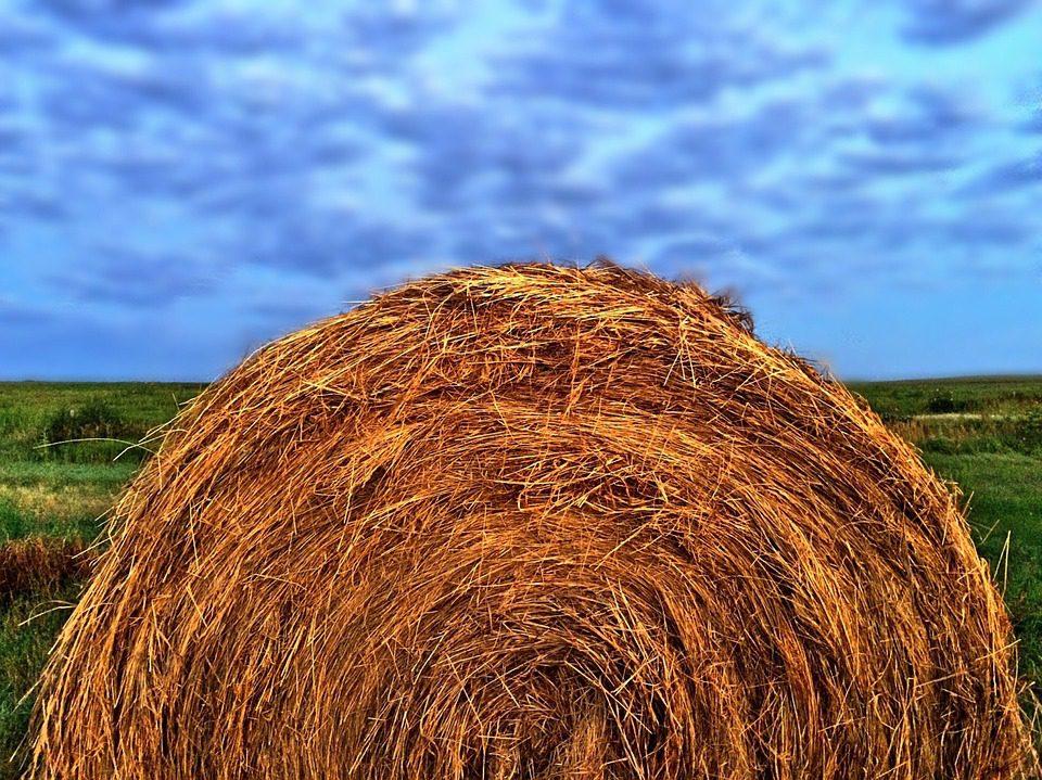 Coldiretti: L'agricoltura del Sud è la più giovane d'Italia