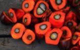 Coldiretti: sale l'acquisto dei prodotti senza olio di palma