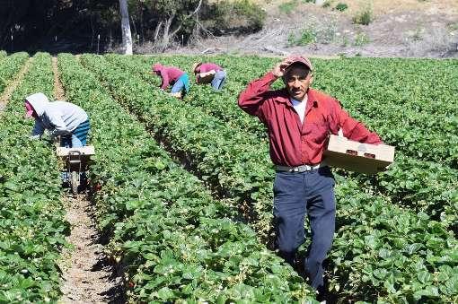 Coldiretti: sbloccati fondi per migliaia di agricoltori