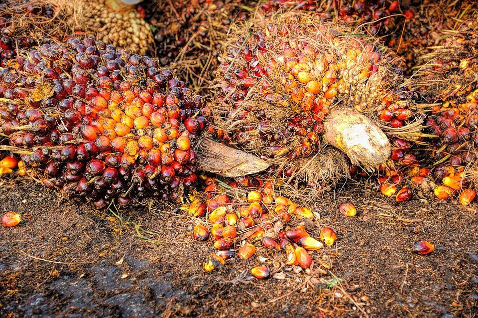 Coldiretti: triplicato l'import di olio di palma