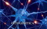 Comandare i neuroni con la luce