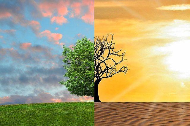 Combattere i cambiamenti climatici a tavola