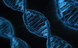 Come il DNA migliora le prestazioni di celle fotovoltaiche