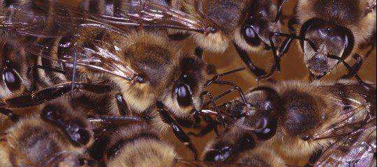 Come sarebbe la vita delle api su Marte?