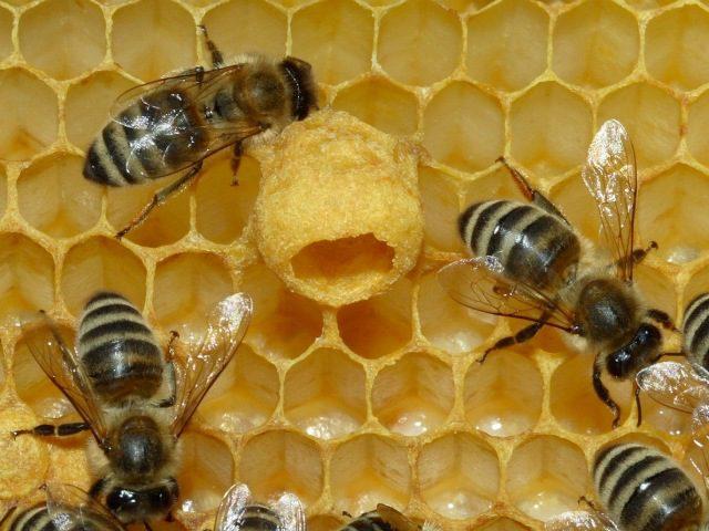 Compag e apicultura